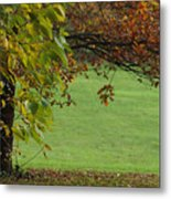Autumn Tree 1 Metal Print