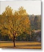 Autumn Tree At Sunset Metal Print
