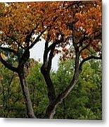 Autumn Tree II Metal Print