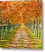 Autumn Tree Metal Print by Julien Fourniol/Baloulumix