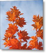 Autumn Tree Leaves Art Prints Blue Sky White Clouds Metal Print