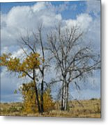 Autumn Trees II Metal Print