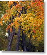 Autumn Trees In Park Metal Print
