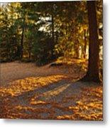 Autumn Trees Near Lake Metal Print