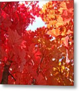 Autumn Trees Red Orange Fall Trees Art Baslee Troutman Metal Print