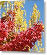 Autumn Trees Red Yellow Fall Tree Blue Sky Landsape Metal Print