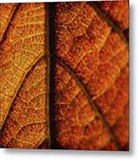 Autumn Veins Metal Print
