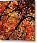 Autumn Wonder Metal Print