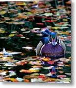 Autumn Wood Duck Metal Print