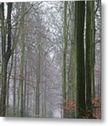 Autumn Woodland Avenue Metal Print