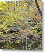 Autumn Woods 2 Metal Print