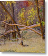 Autumn Yearling Metal Print