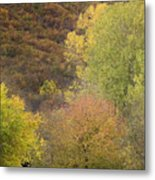 Autumn1 Metal Print