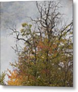 Autumn3 Metal Print