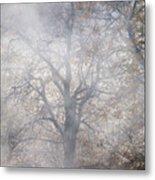Autumn4 Metal Print