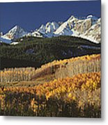 Autumnal View Of Aspen Trees And The Metal Print