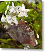Autumnleaf Butterfly Metal Print