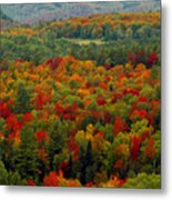 Autumns Colors Metal Print