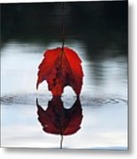Autumns Final Descent Metal Print by William Carroll