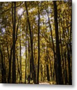 Autumns Fire Metal Print