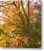 Autumn's Gold - Photograph Metal Print