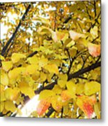 Autumns Gold Metal Print