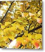 Autumns Gold Metal Print