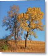 Autumn's Gold - No 1 Metal Print