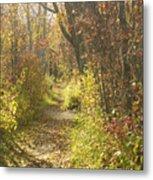 Autumns Path Metal Print