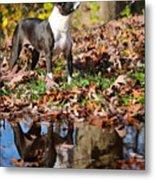 Autumn's Reflection Metal Print