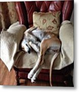 Ava - Asleep On Her Favourite Chair Metal Print