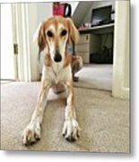 Ava On Her First Birthday #saluki Metal Print
