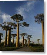 Avenue Des Baobabs Metal Print