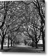 Avenue Of Trees Monochrome Metal Print