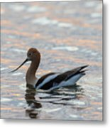 Avocet Sunset Metal Print