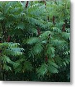 Awaiting The Sumac Metal Print