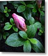 Awakening - Flower Bud In The Rain Metal Print