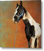 Awesome Gypsy Horse Metal Print