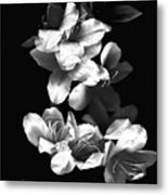Azaela Blossom In Black And White Metal Print