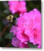 Azalea And Mr. Bumbles 05 Metal Print