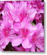 Azalea Floral Garden Fine Art Photography Baslee Troutman Metal Print