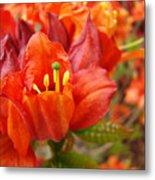 Azalea Flowers Art Prints Azaleas Gilcee Art Prints Baslee Troutman Metal Print
