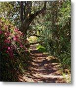 Azalea Path  Metal Print