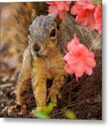 Azalea Squirrel Metal Print