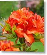 Azaleas Art Home Decor 14 Orange Azalea Flowers Art Prints Greeting Cards Metal Print