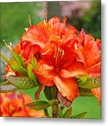 Azaleas Art Home Decor 14 Orange Azalea Flowers Art Prints Greeting Cards Metal Print
