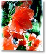 Azaleas In The Spring Metal Print