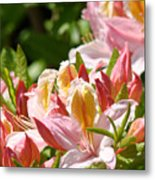 Azaleas Pink Orange Yellow Azalea Flowers 6 Summer Flowers Art Prints Baslee Troutman Metal Print