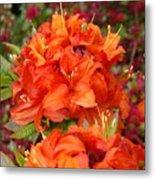Azaleas Rhodies Art Prints Azalea Flowers Giclee Baslee Troutman Metal Print