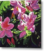 Azaleas With Dew Drop Metal Print